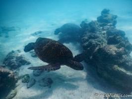 magische Momente unter Wasser